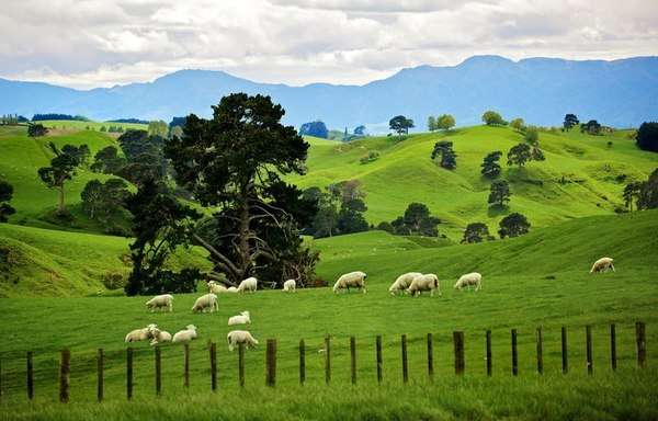 Пастбище овец