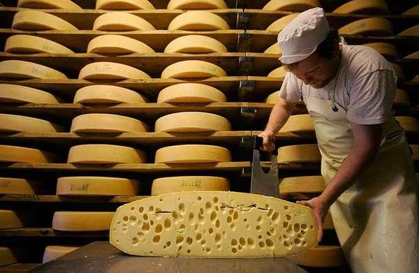 Бизнес-идея: Производство сыра в промышленных масштабах